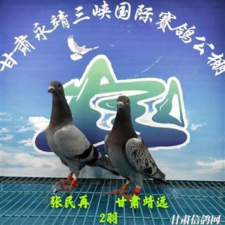 甘肃三峡国际赛鸽公棚4月18日幼鸽入