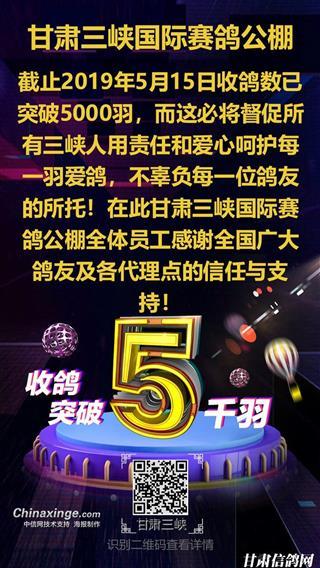 甘肃三峡国际赛鸽公棚收鸽破5千