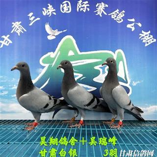 甘肃三峡国际赛鸽公棚5月17日幼鸽入