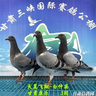 甘肃三峡国际赛鸽公棚5月18日幼鸽入