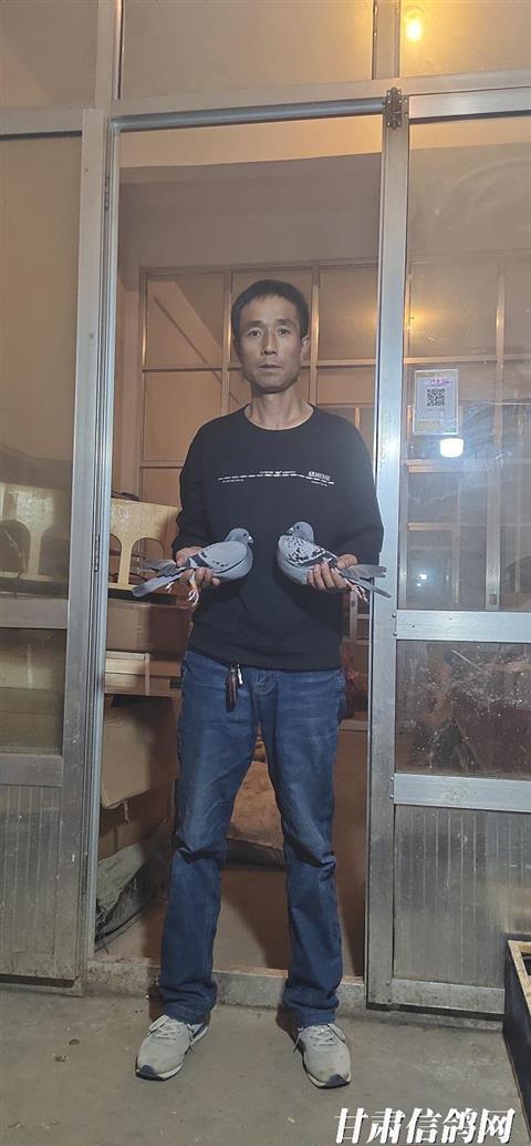 积石山县爱翔赛鸽俱乐部2019年秋季520公里前十