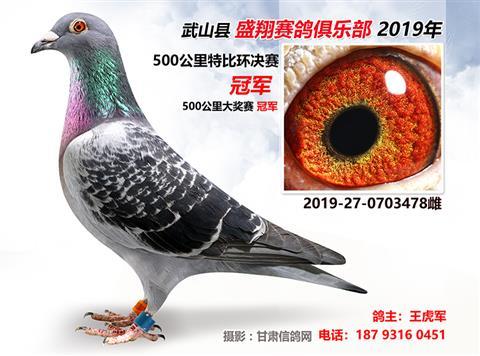 武山盛翔赛鸽俱乐部2019年特比环获奖鸽子1-10