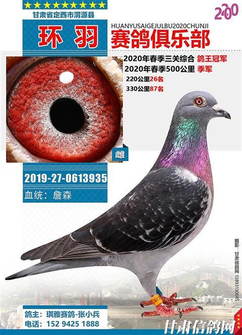 渭源县环羽赛鸽俱乐部2020年春季获奖鸽